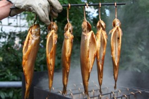 Frisch geräucherte Forelle im Räucherofenn